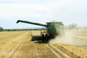 1 Barley Harvest 2013