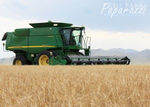 4 Barley Harvest 2013 | The Farm Paparazzi
