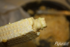 Freezing Corn X | The Farm Paparazzi