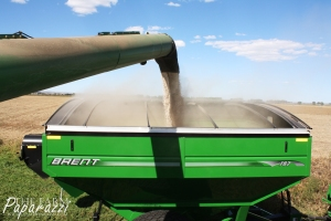 Throws of Harvest III | The Farm Paparazzi