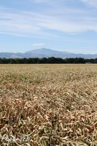 Throws of Harvest V | The Farm Paparazzi