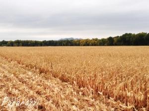 Busyness IV | The Farm Paparazzi