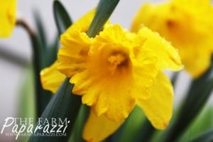 Spring Has Sprung | The Farm Paparazzi