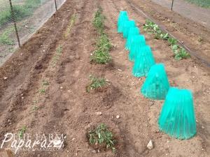 How Does Your Garden Grow? | The Farm Paparazzi
