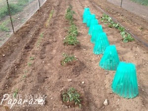 How Does Your Garden Grow? | The Farm Paparazzi