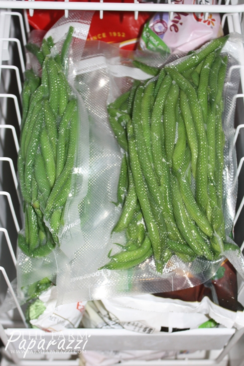 Freezing Green Beans XV