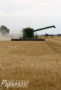 Malt Barley Harvest 2014 | The Farm Paparazzi