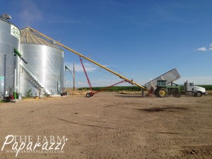 Malt Barley Harvest 2014 | The Farm Paparazzi