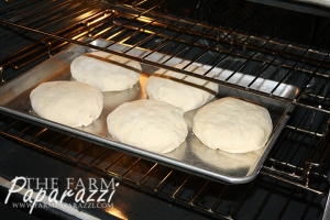 Cabbage Burgers | The Farm Paparazzi