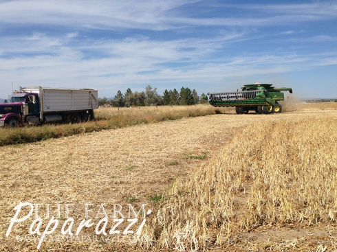 Fall 2014 | The Farm Paparazzi