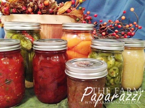 Fall 2014 | The Farm Paparazzi