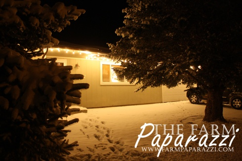 Winter Glow | The Farm Paparazzi