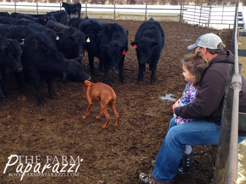 Christmas, Kids, Cows and Clay | The Farm Paparazzi
