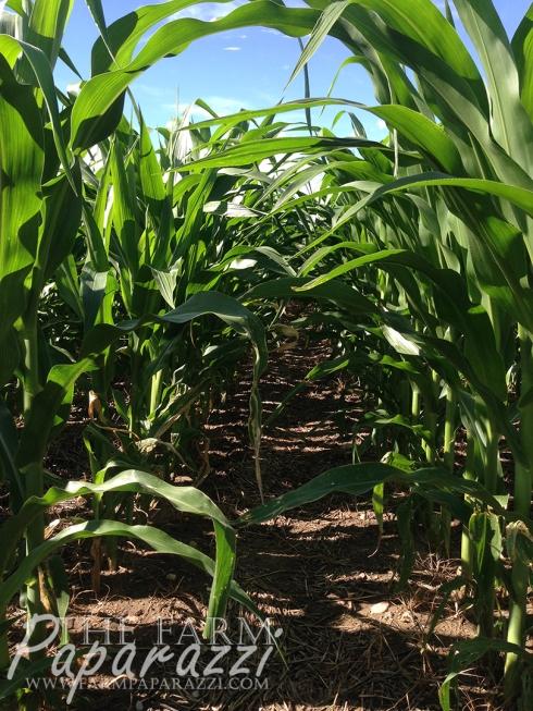 Growing | The Farm Paparazzi