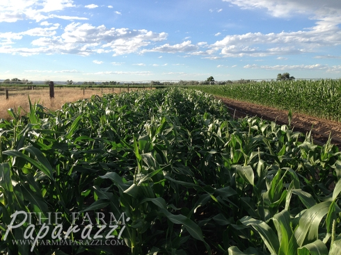 Soaking Up the Sun | The Farm Paparazzi