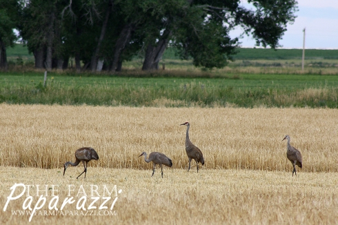 Bird is the Word | The Farm Paparazzi