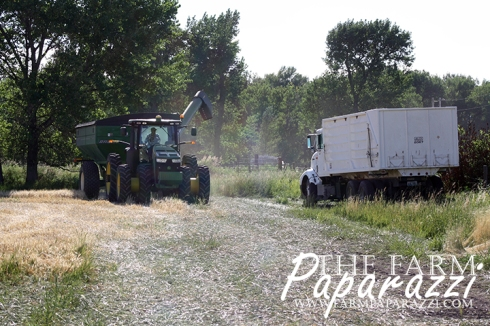 See the Grain Cart Work | The Farm Paparazzi
