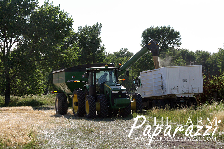 The Farm Paparazzi | Armed with an automatic setting to