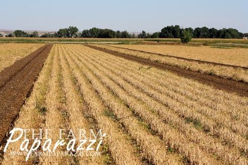 Frijoles | The Farm Paparazzi