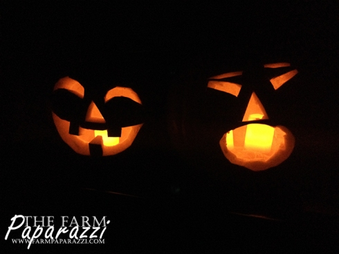 Halloween Merriment | The Farm Paparazzi