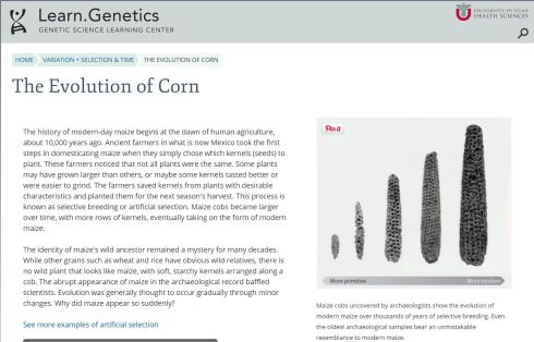 The Evolution of Corn - University of Utah